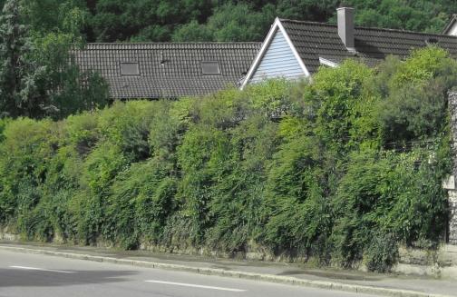 naturawall vegetative Lärmschutzwand